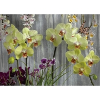 Orchids Giant Mural