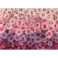 Pink Rose Blooms Giant Mural