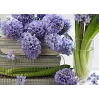 Hyacinth Blooms Giant Mural