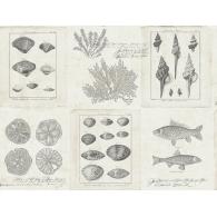Cape Cod Frames Destination USA Wallpaper