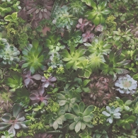 Succulents Evergreen Wallpaper