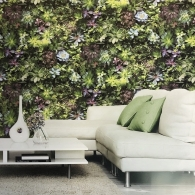 Succulents Evergreen Mural Room Setting