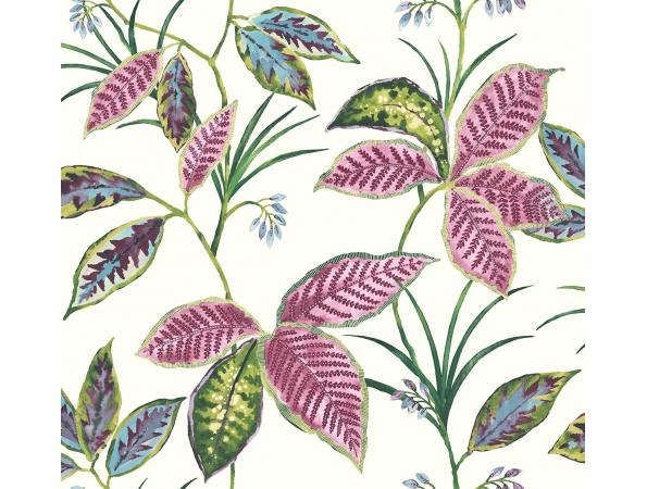 Leaves Maui Maui Wallpaper