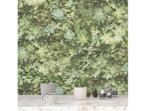 Succulents Evergreen Wallpaper Room Setting