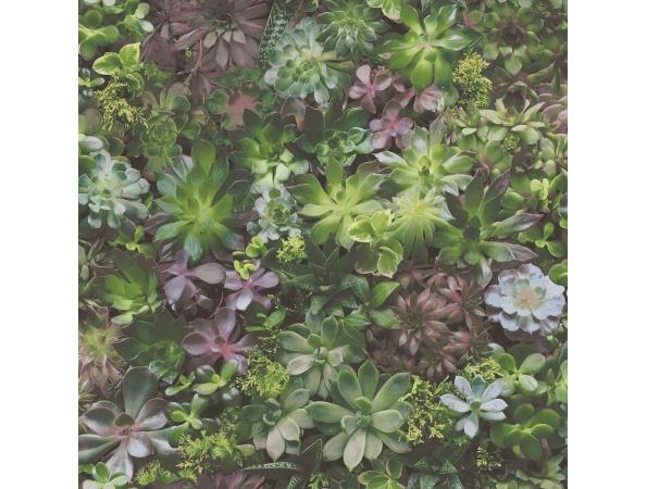 Succulents Evergreen Wallpaper
